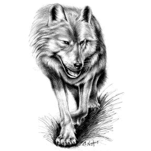 Wzór Tatuażu Wilk Monika Wypożyczalnia Sprzętu